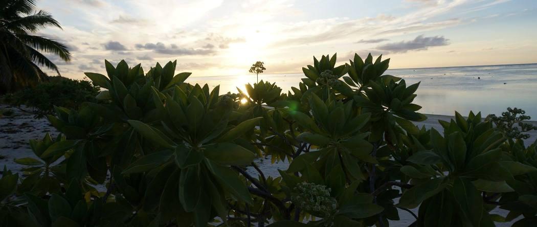 Aitutaki beach (1)
